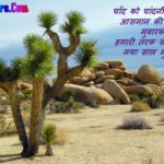 Happy New Year Shayari Hindi image photo wallpaper hd download